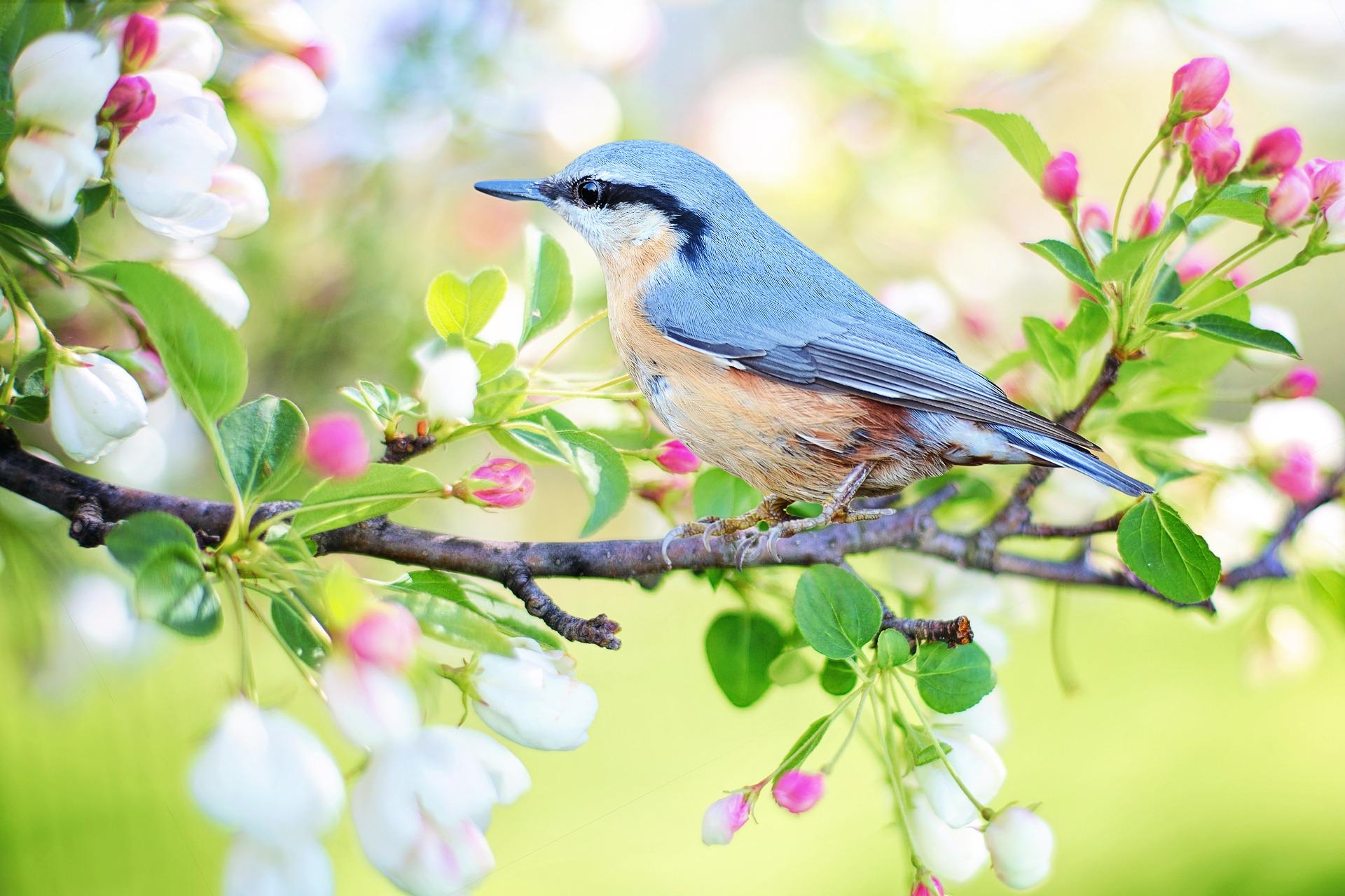 bird blue beauty