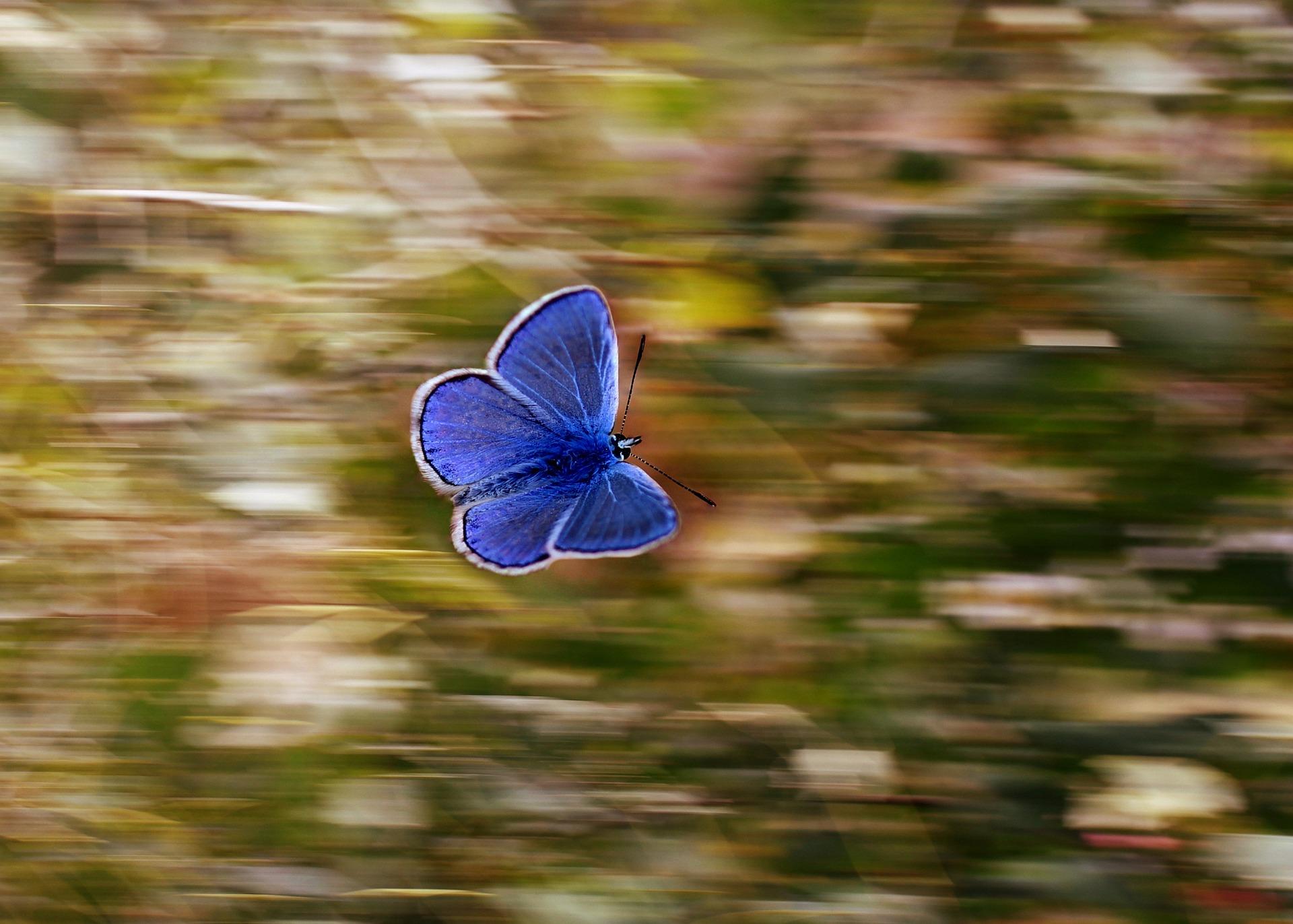butterfly-2837589_1920.jpg