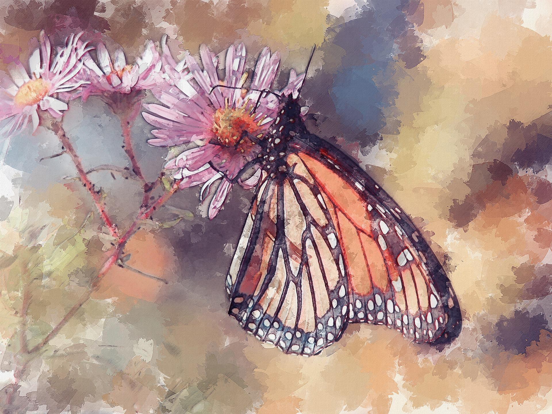 butterfly-3407358_1920